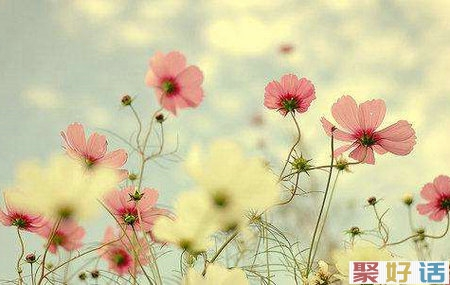 有人爱,有家便有归路,心安便是幸福插图(1)