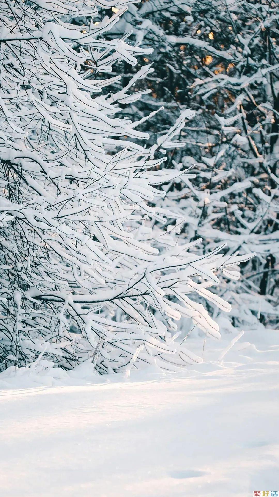 非常有文章的初冬第一场雪文案: 霜雪落满头,也算共白首插图(3)