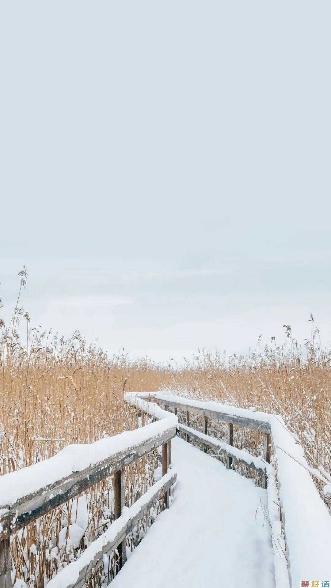 非常有文章的初冬第一场雪文案: 霜雪落满头,也算共白首插图(4)