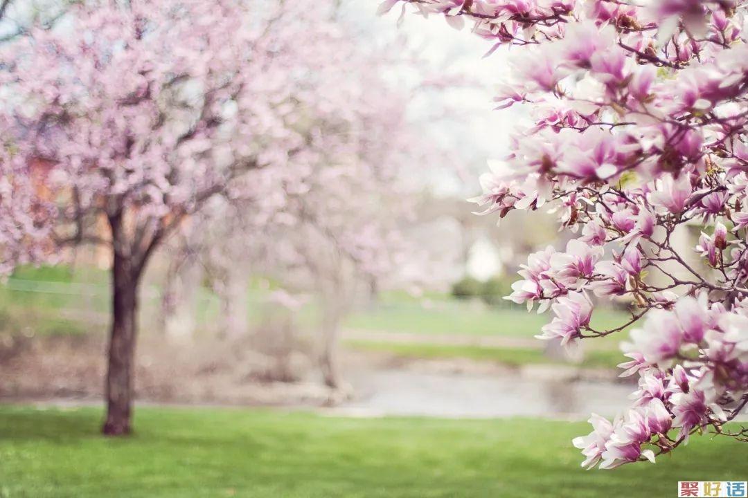 春季踏青出游,朋友圈文案除了美,还能写啥?插图1