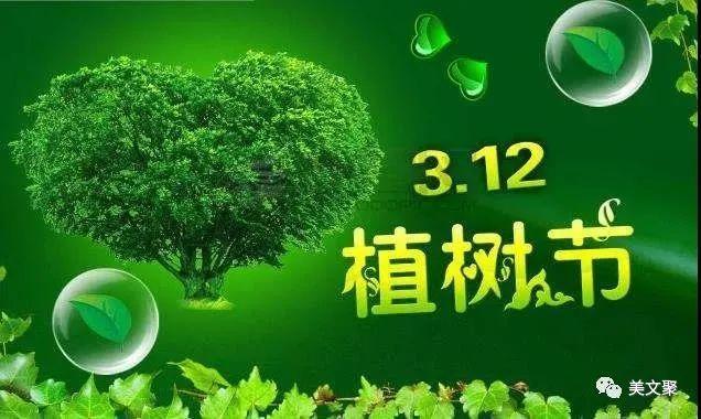 植树节优美文案:植树节,别忘给你的发财树浇水哦!插图