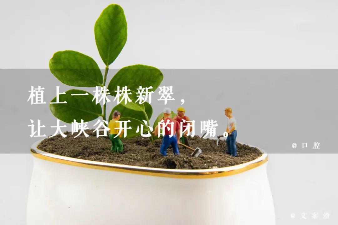植树节海报文案/植树节朋友圈文案(2021文案渣)插图29