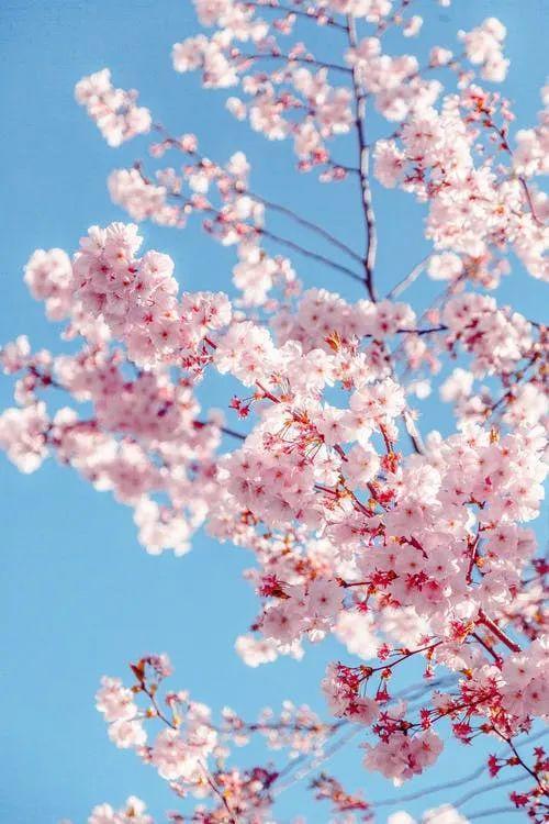 10句春分文案: 十里春风不如你, 今日春分不如你!插图1