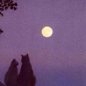 简单爱情文案短句:明媚皓月,初见便是钟情。插图