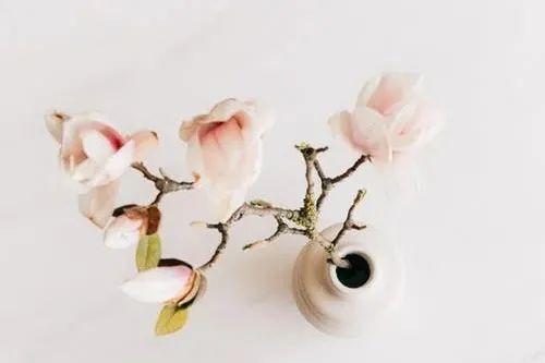 10句春分文案: 十里春风不如你, 今日春分不如你!插图