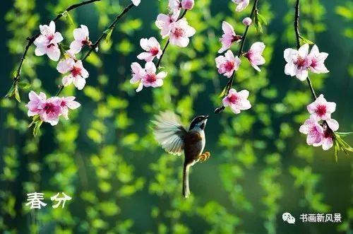 春分古诗词二十二首: 桃李艳妆新~插图8