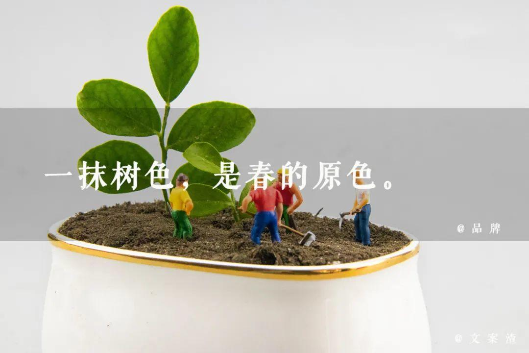 植树节海报文案/植树节朋友圈文案(2021文案渣)插图9