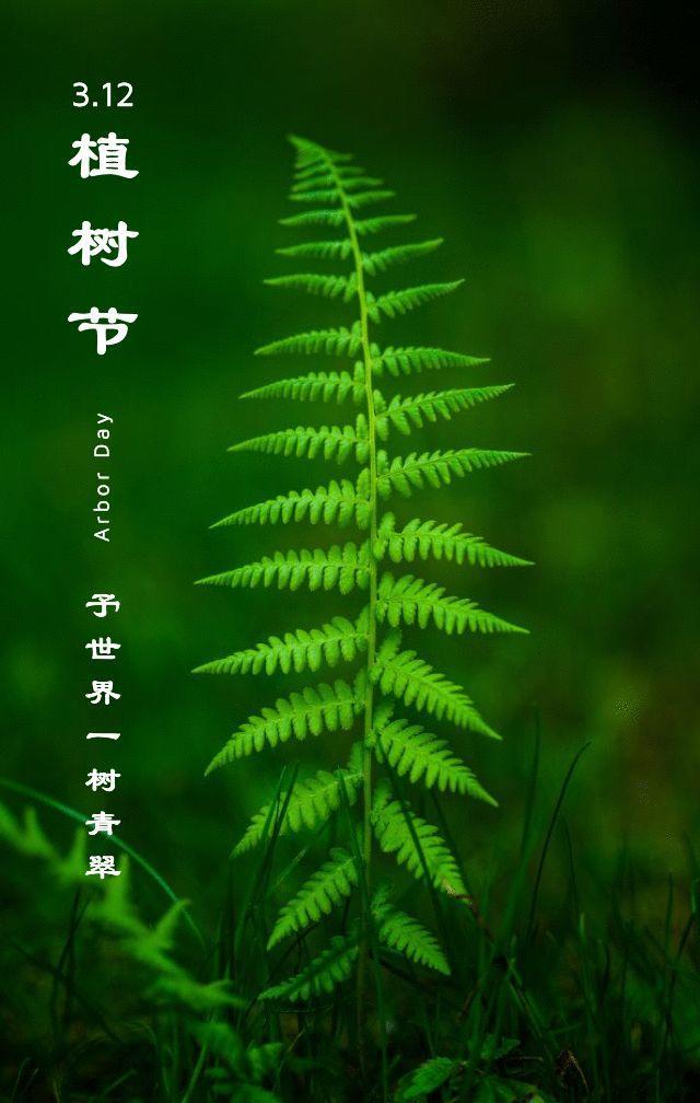 植树节文案、植树节海报宣传标语设计欣赏: 植树节, 你想栽在我心上?插图61
