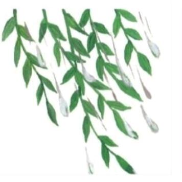 朋友圈配图: 3.12植树节文案+12组九宫格插图59