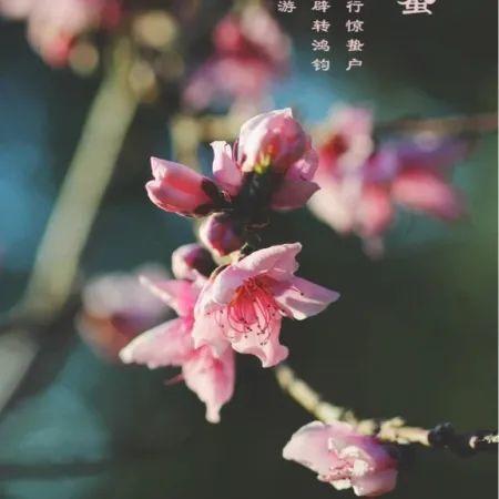 惊蛰   精选朋友圈节日文案插图13
