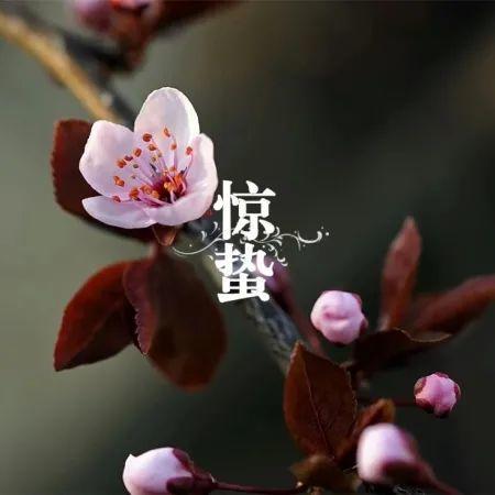 惊蛰   精选朋友圈节日文案插图14