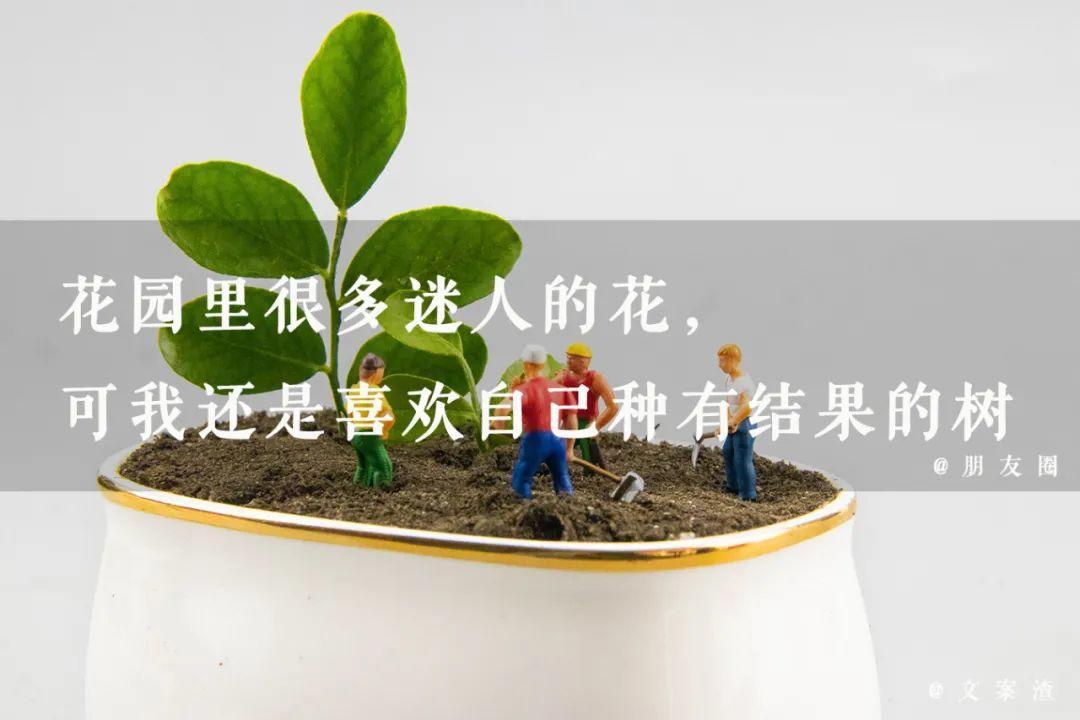 植树节海报文案/植树节朋友圈文案(2021文案渣)插图18