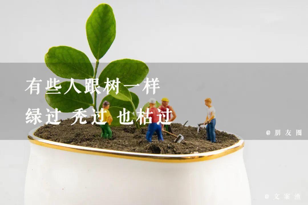 植树节海报文案/植树节朋友圈文案(2021文案渣)插图26