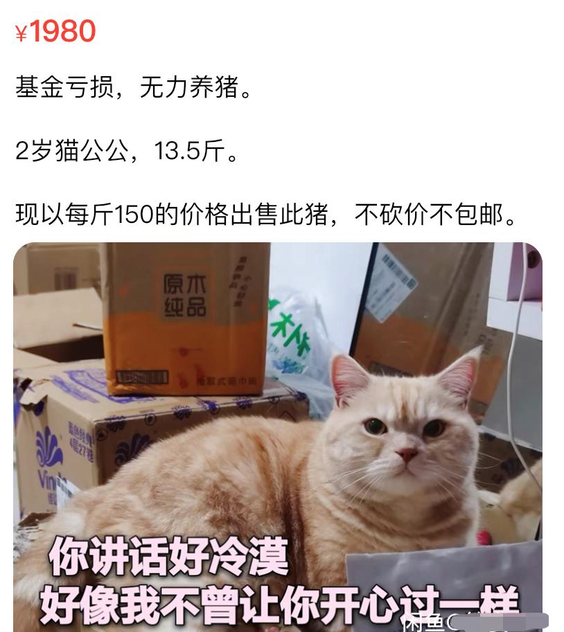 基金大跌,火了闲鱼卖货文案~插图14