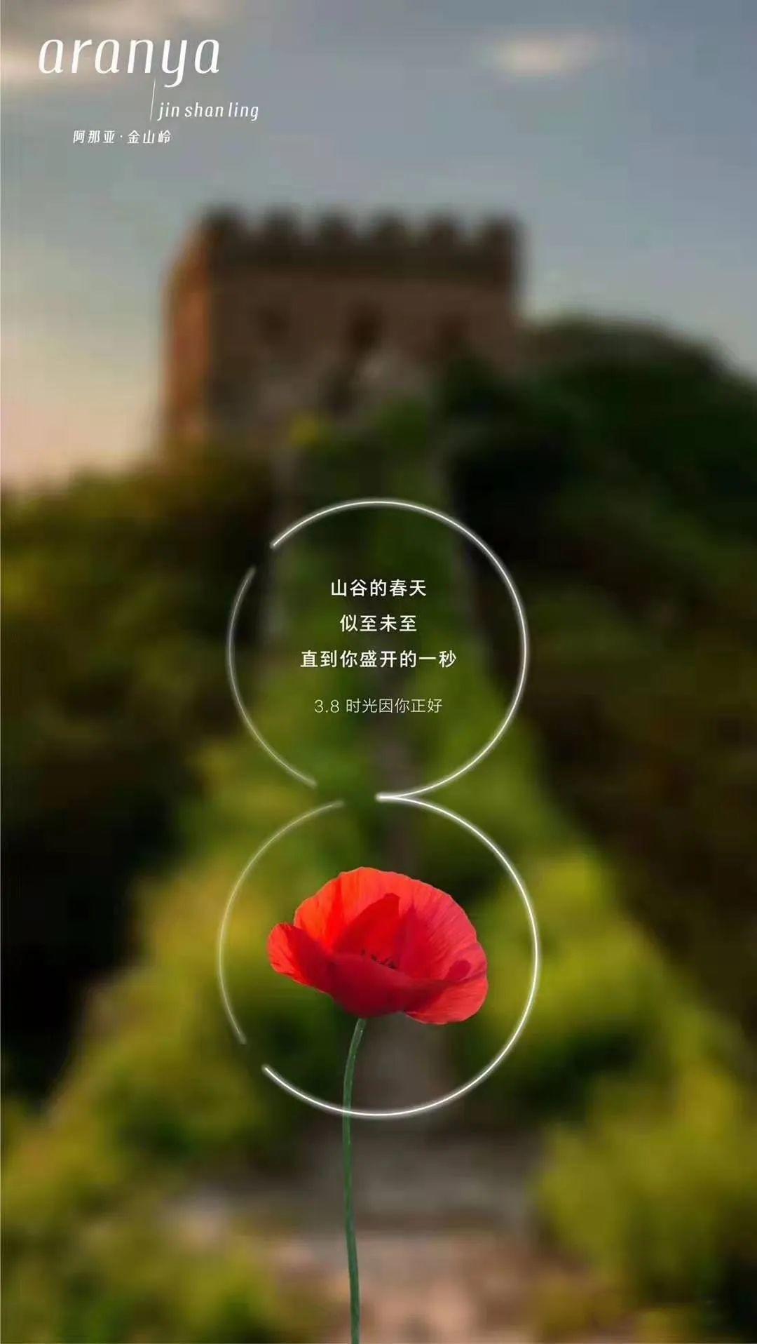 三八女神节 | 文案祝福:愿以美好,呵护你的高光!插图17
