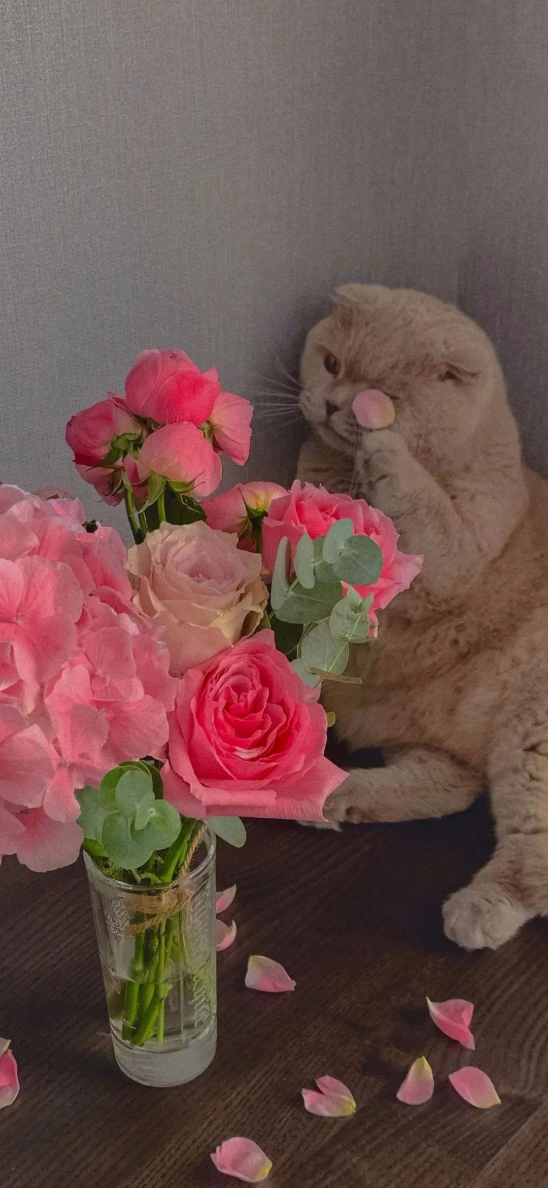 朋友圈经典的关于玫瑰的文案:玫瑰花期到了,我很想你。插图1