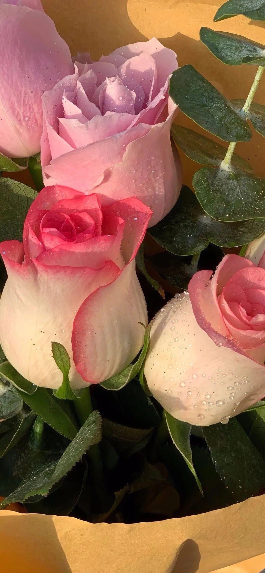 朋友圈经典的关于玫瑰的文案:玫瑰花期到了,我很想你。插图4