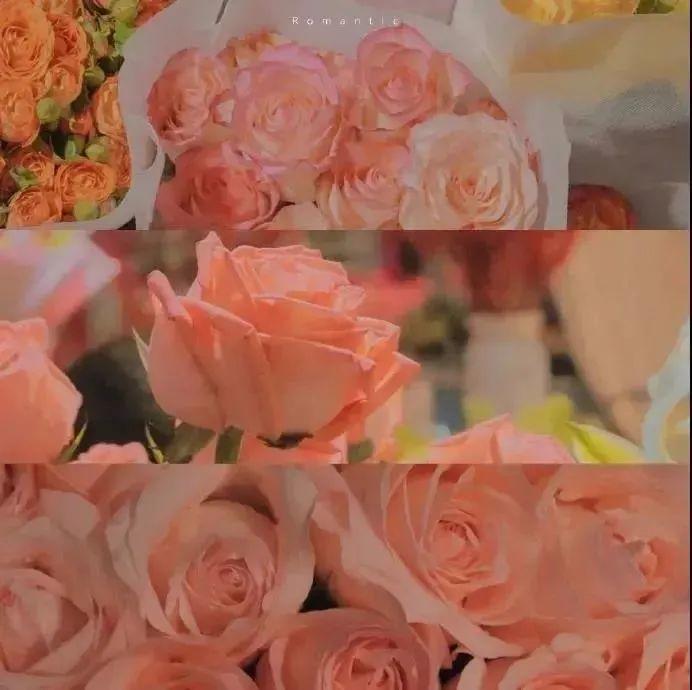 朋友圈经典的关于玫瑰的文案:玫瑰花期到了,我很想你。插图2